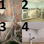4 Types Common Mold